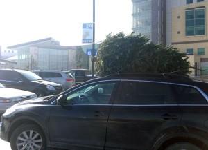 cartree2-300x217